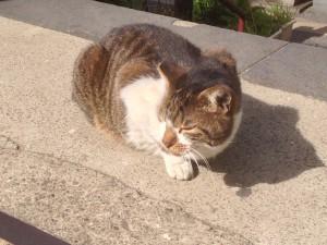 柳森神社 猫
